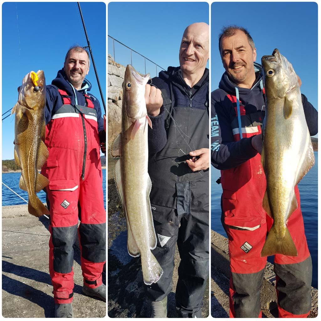 HookPoint Fishing Magazine Skarnsundet Steve Harder Phill Dale Pollack Ling Cod Lures