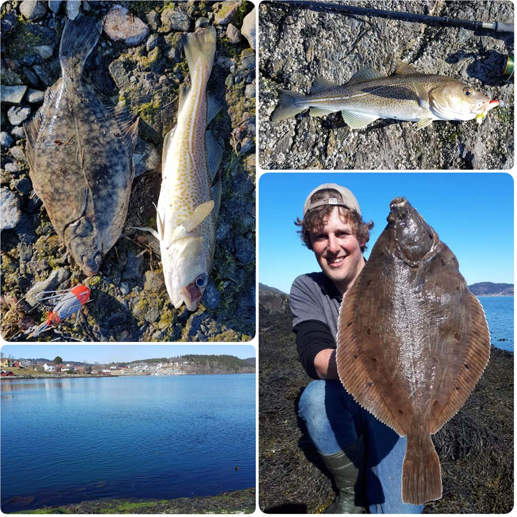 HookPoint Fishing Magazine Skarnsundet Steve Harder Phill Dale Jacob Wadey Plaice Flounder Cod Fjord