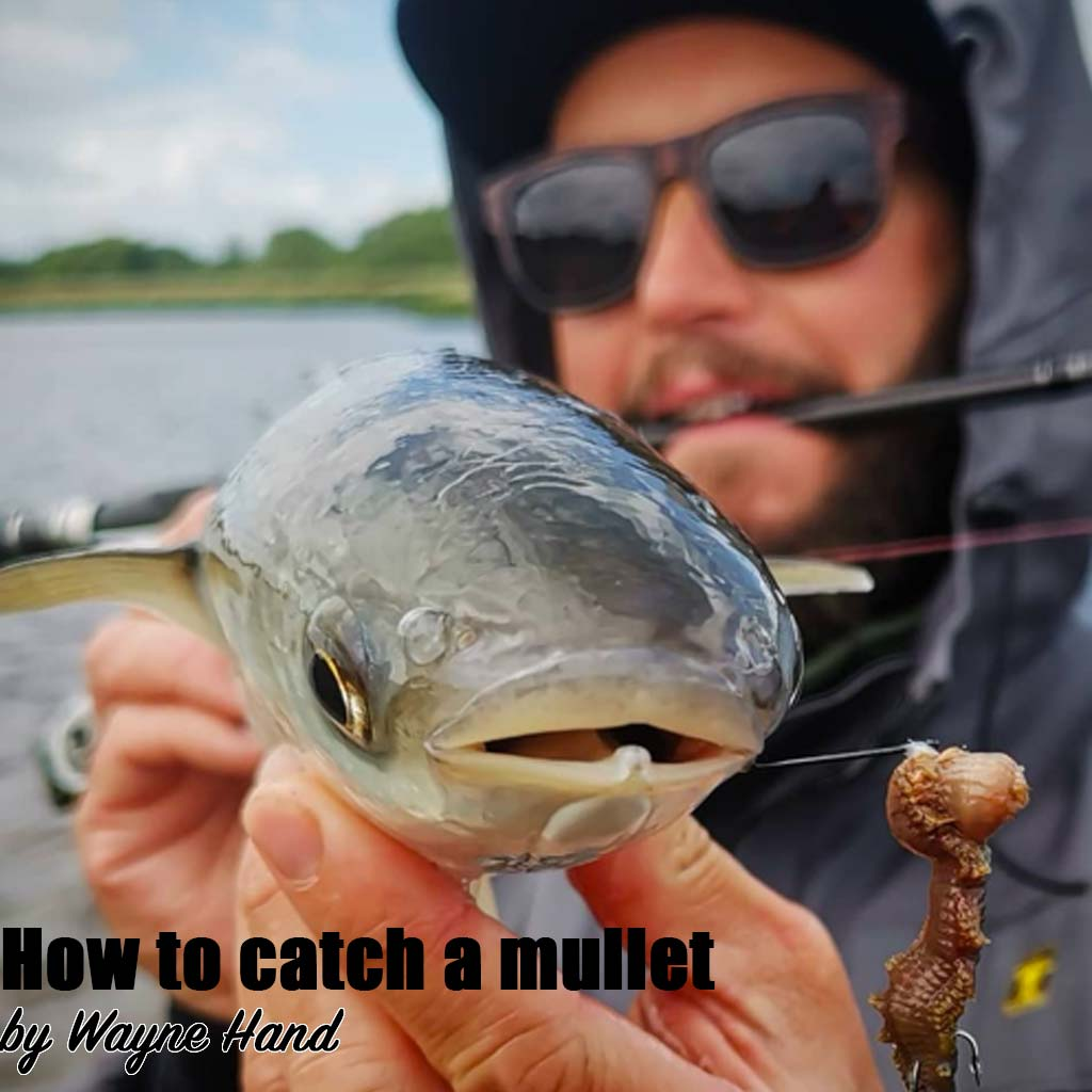 How to catch a mullet cover by wayne hand