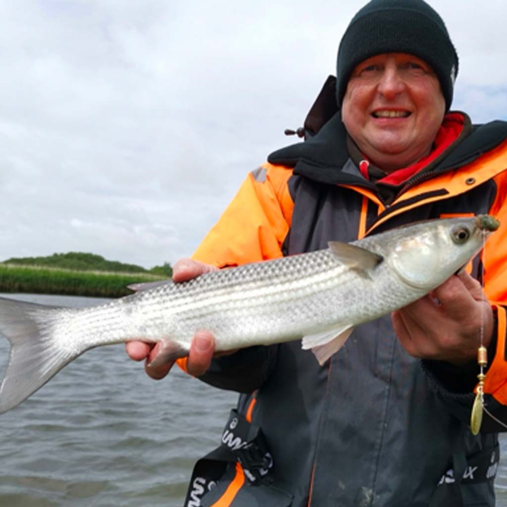 Christchurch harbour mullet