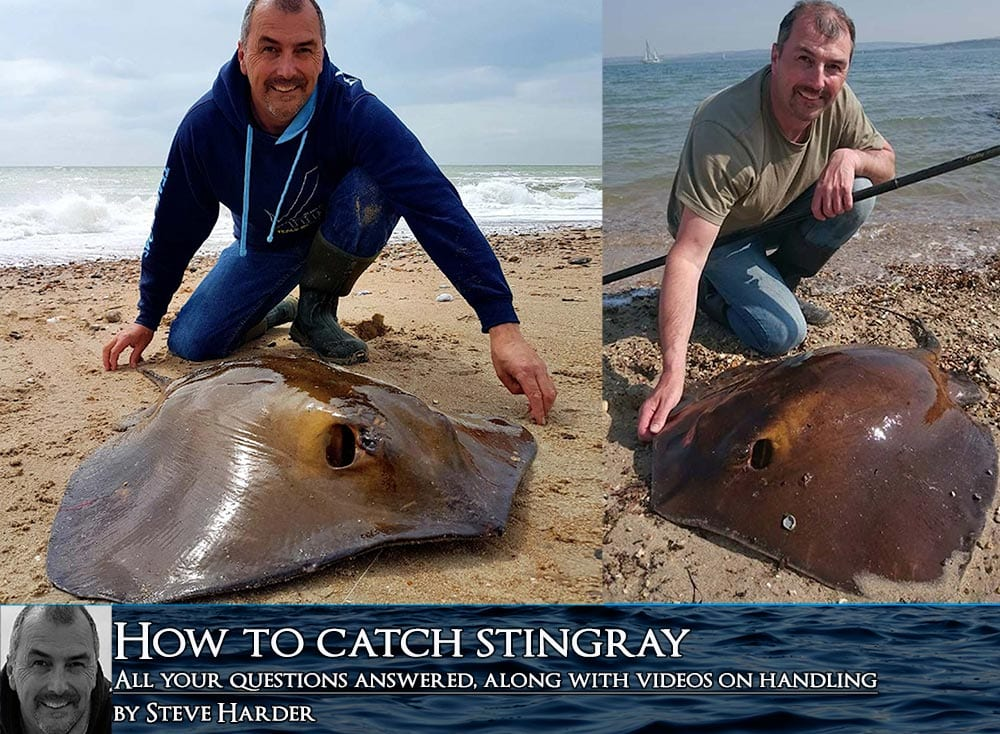 How to catch a stingray with steve harder