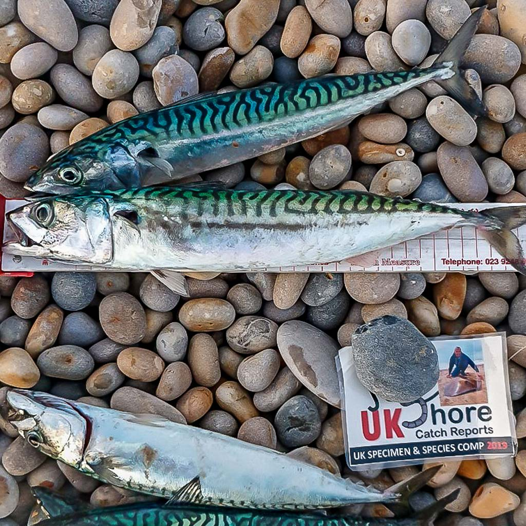 Chesil Mackerel