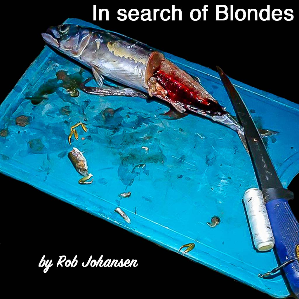 In search of blondes cover by Rob Johansen