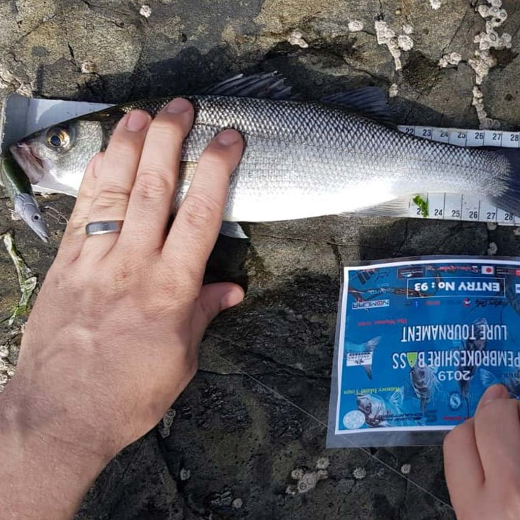 A small bass caught in the pembrokeshire lure tournament