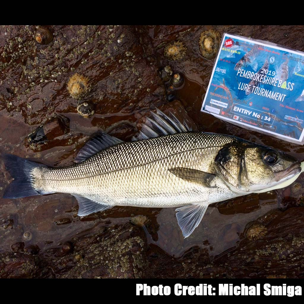 Michal Smiga's bass in the pembrokeshire bass lure tournament