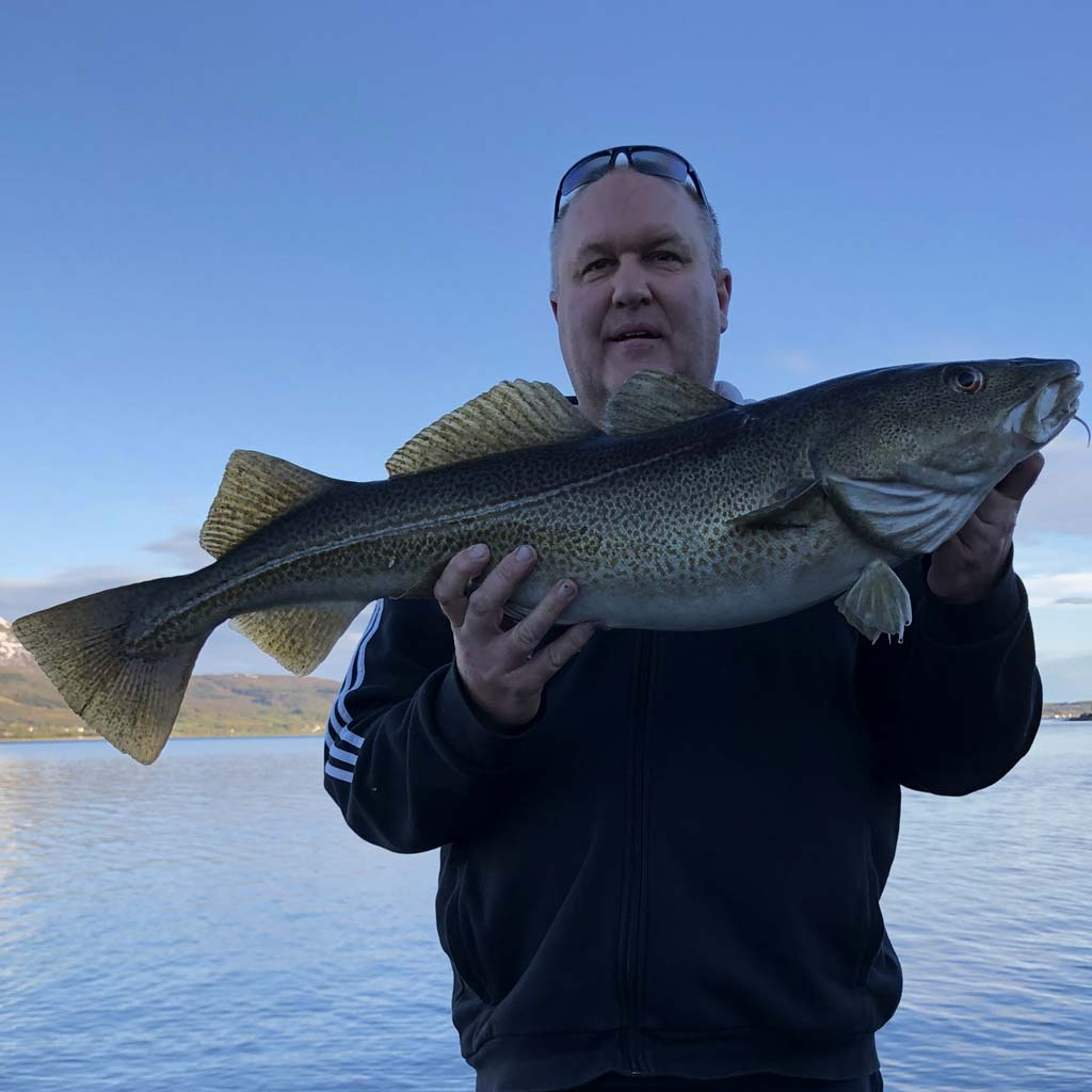 An average norway shore caught cod