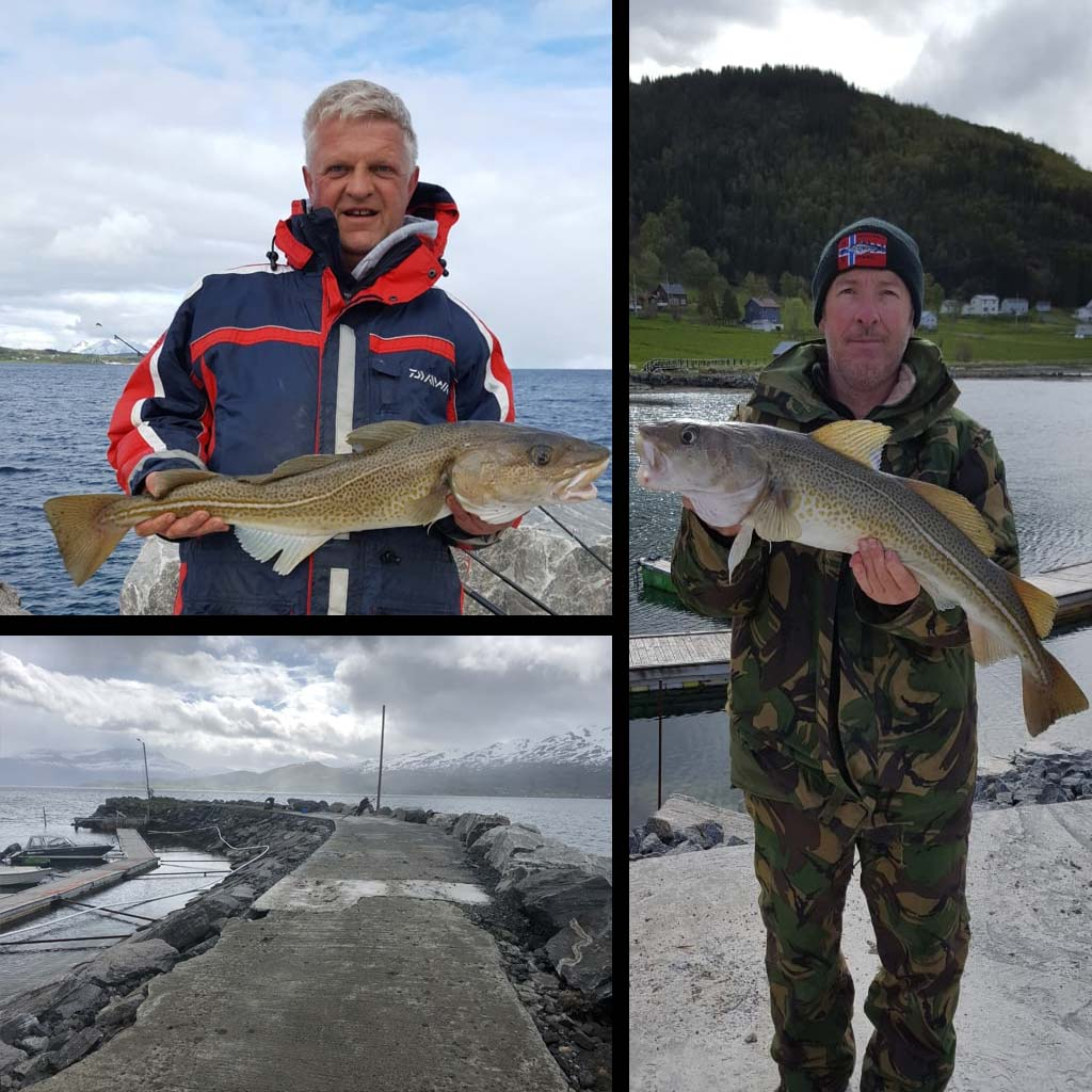 average norway shore caught cod
