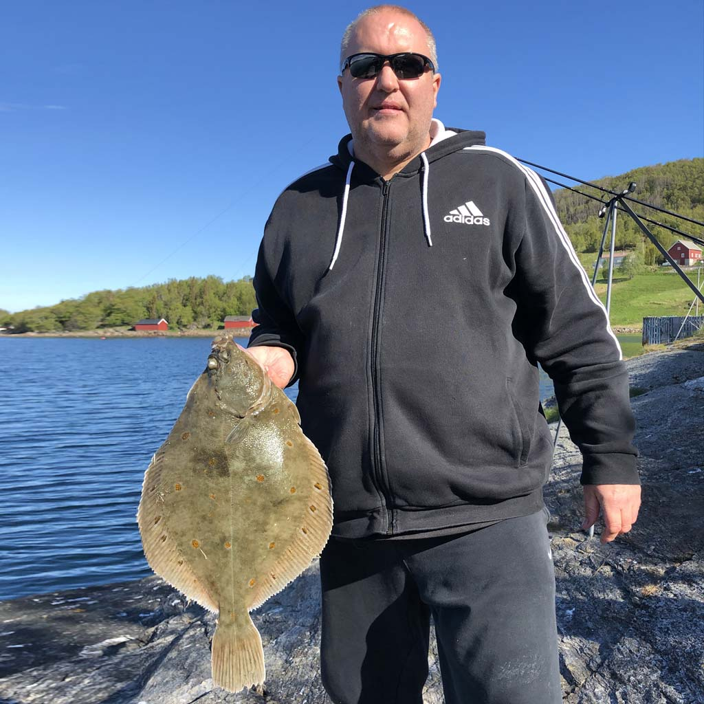 a nice Norway specimen plaice