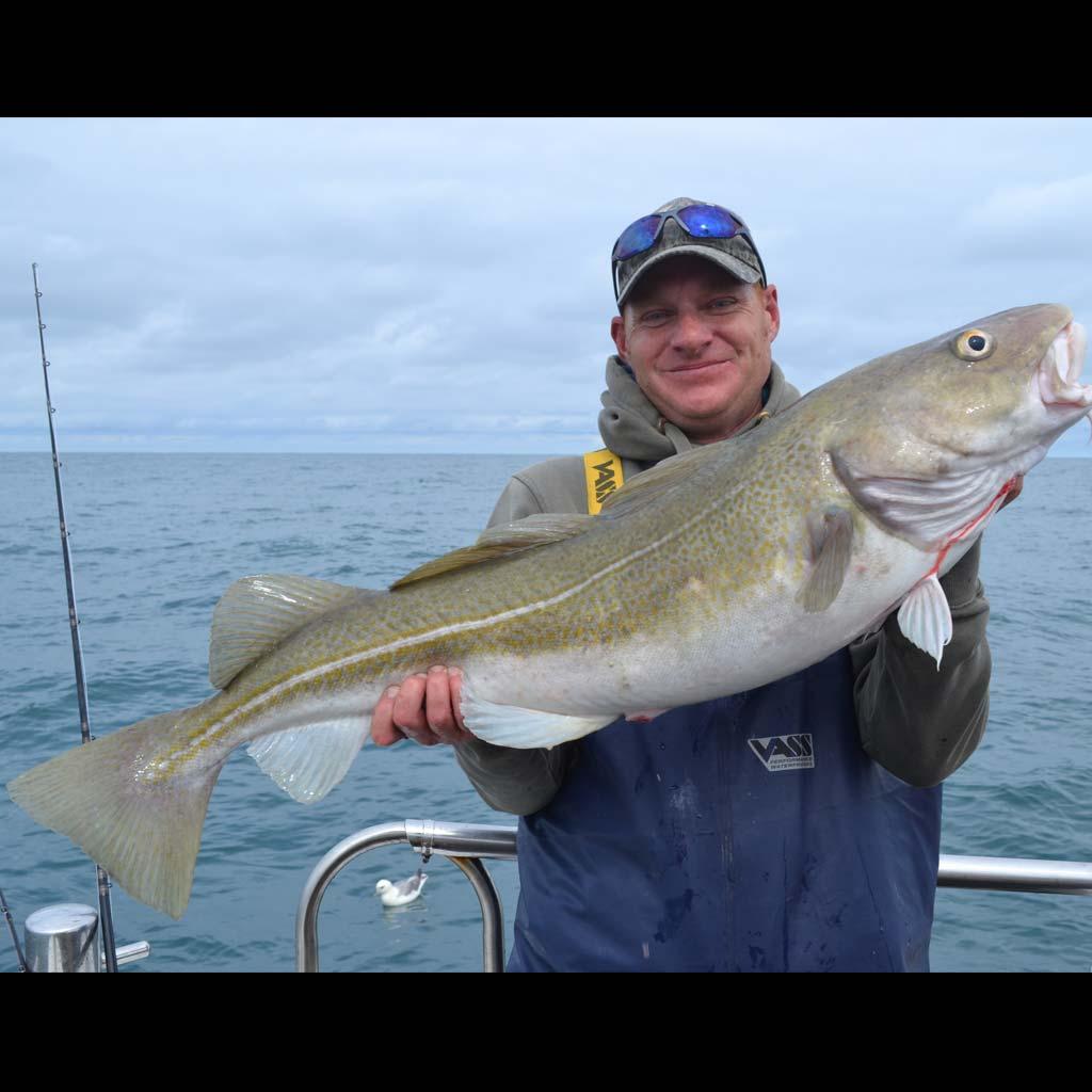 Shetland Cod