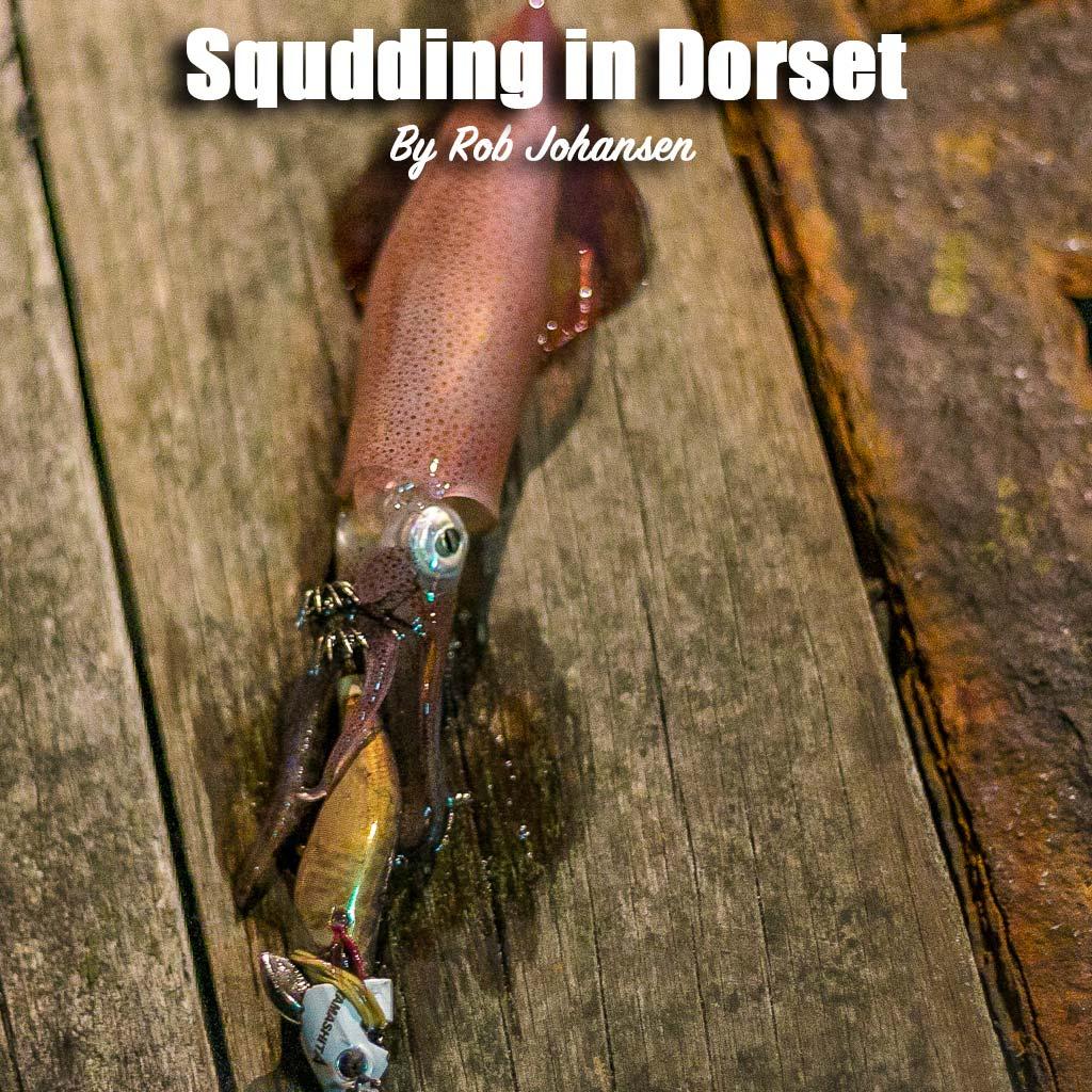 squid in dorset