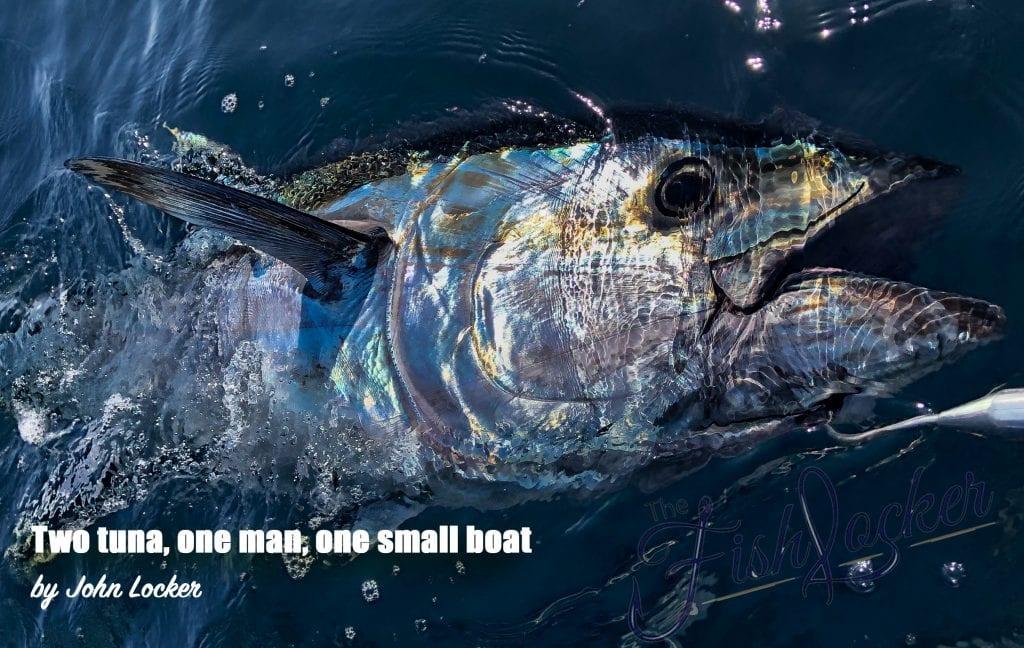 blue fin tuna from cornwall