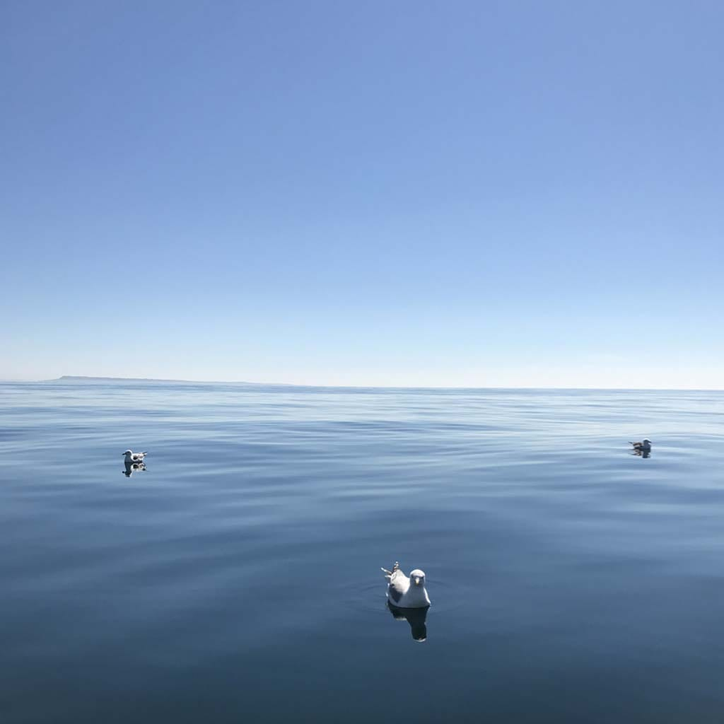 seagulls on expansive ocean