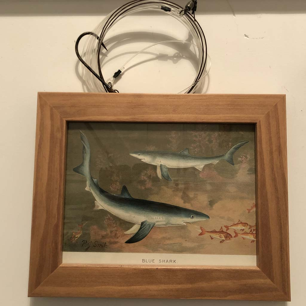 the winning rig above a portrait of a blue shark