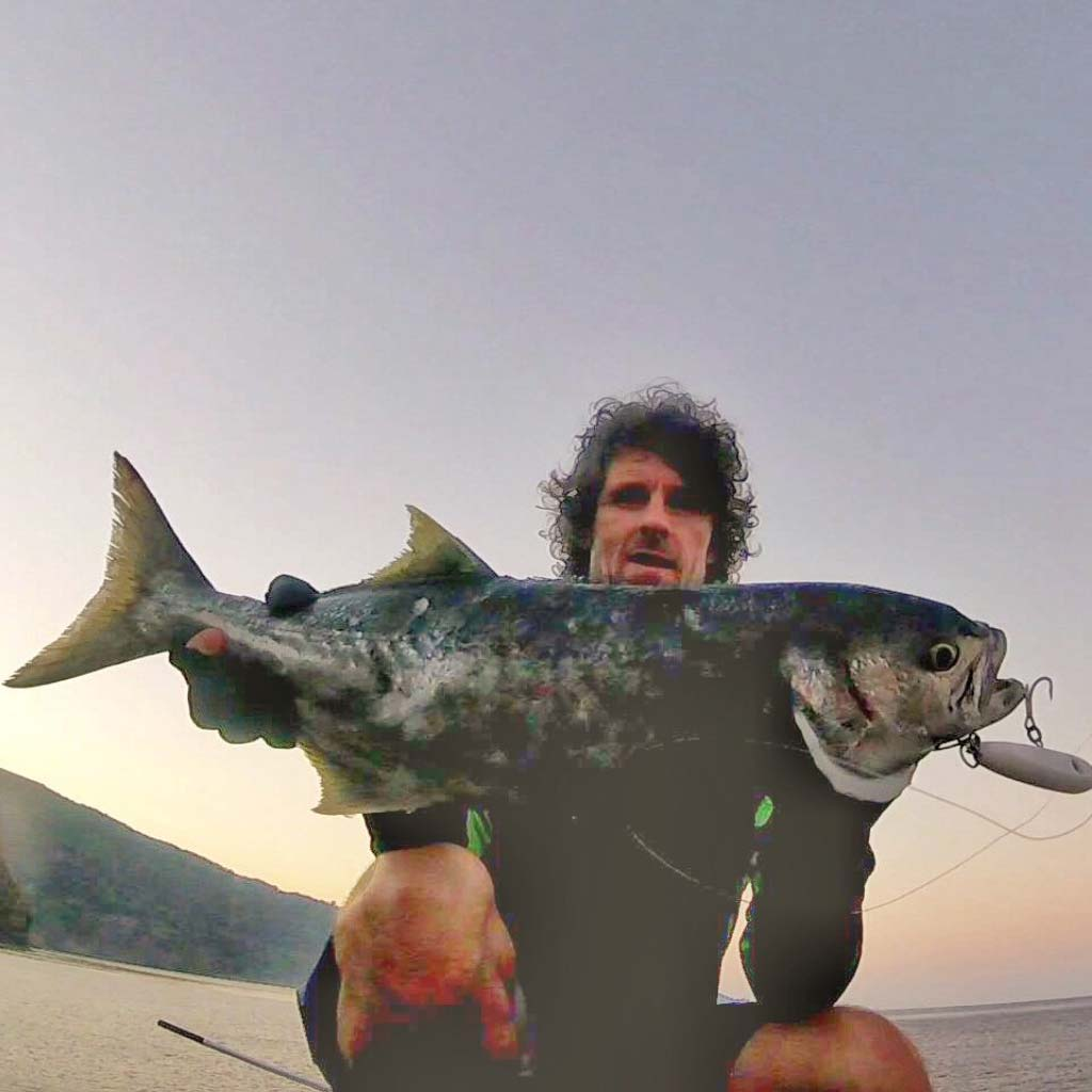 a hard won bluefish on a samson lure for grant woodgate
