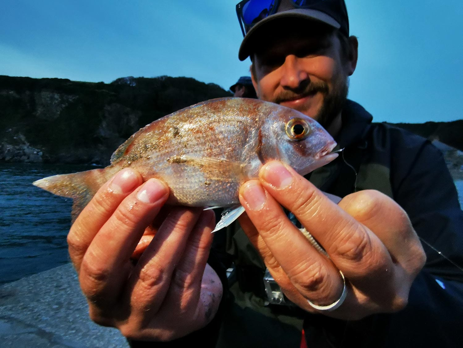a small couches bream caught with LRF tactics