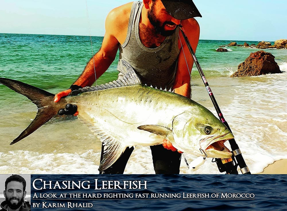 Chasing leer fish feature cover