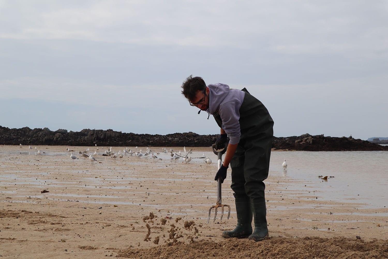 digging for sandeel in Jersey