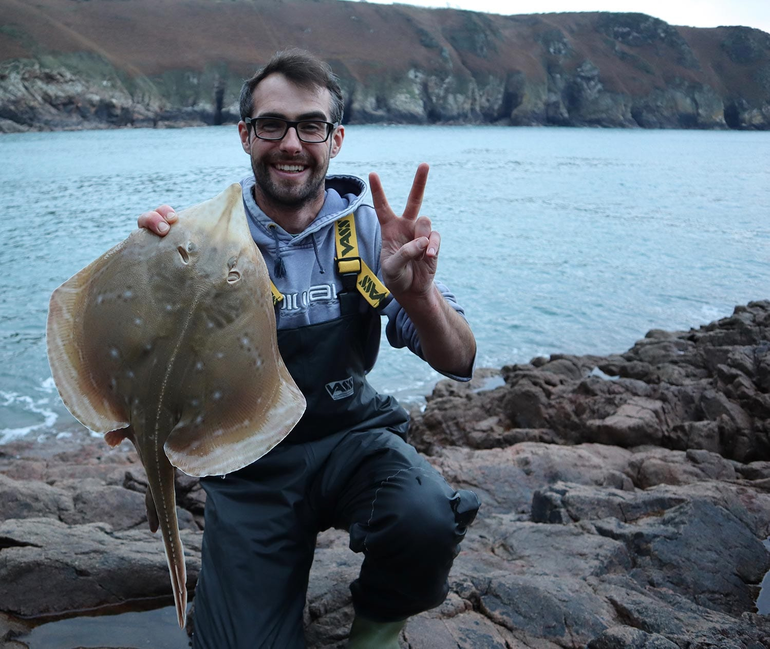 a shore caught small eyed ray from the channel islands