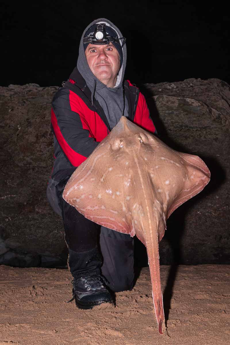Mark Reed with an excellent small eyed ray from a Cornish surf beach