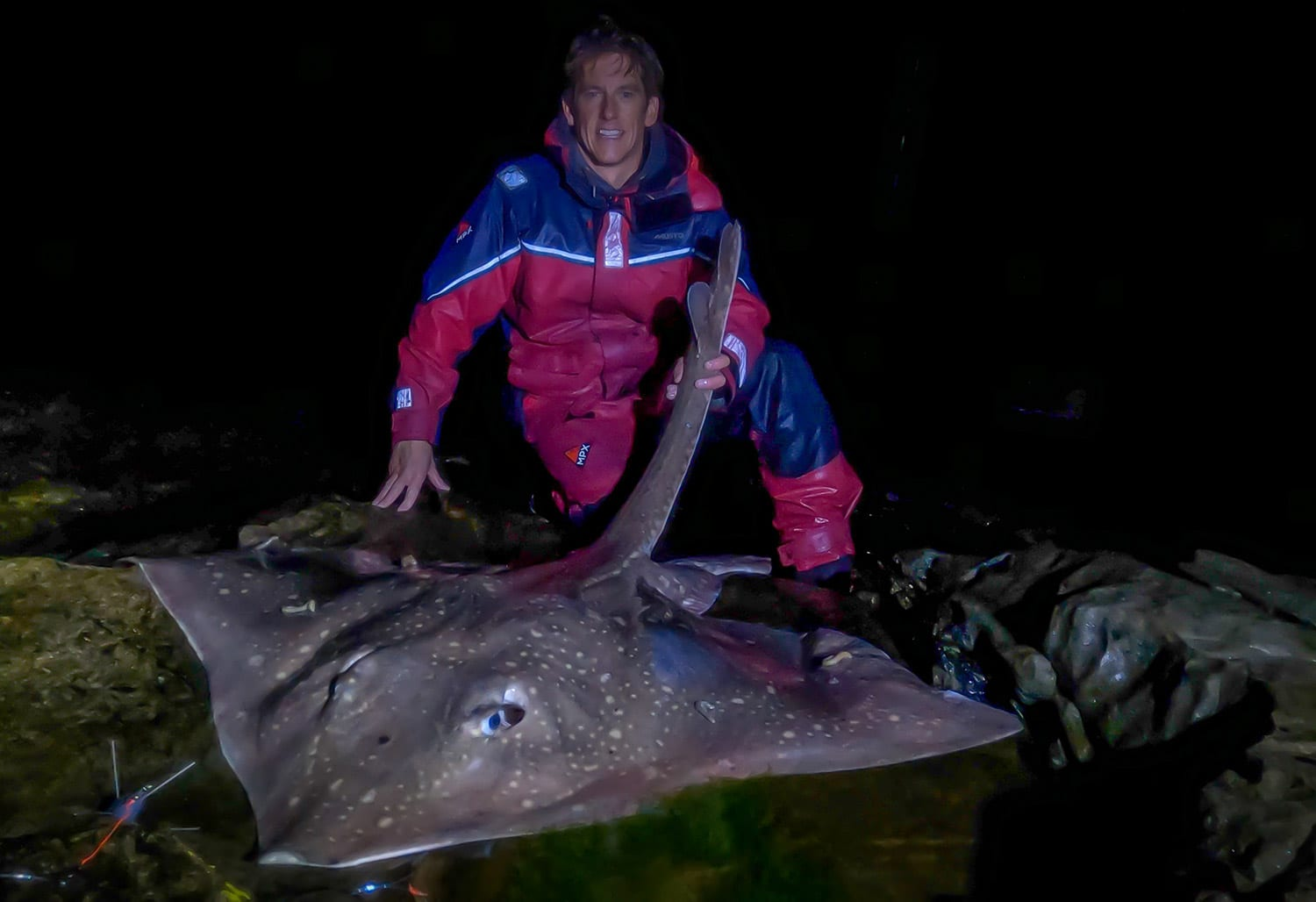 a big flapper skate on the rocks ready for release