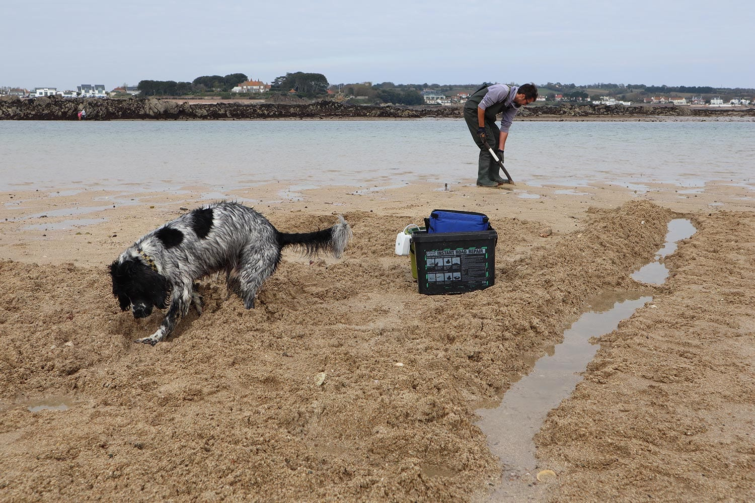 trench digging for sandeel in Jersey