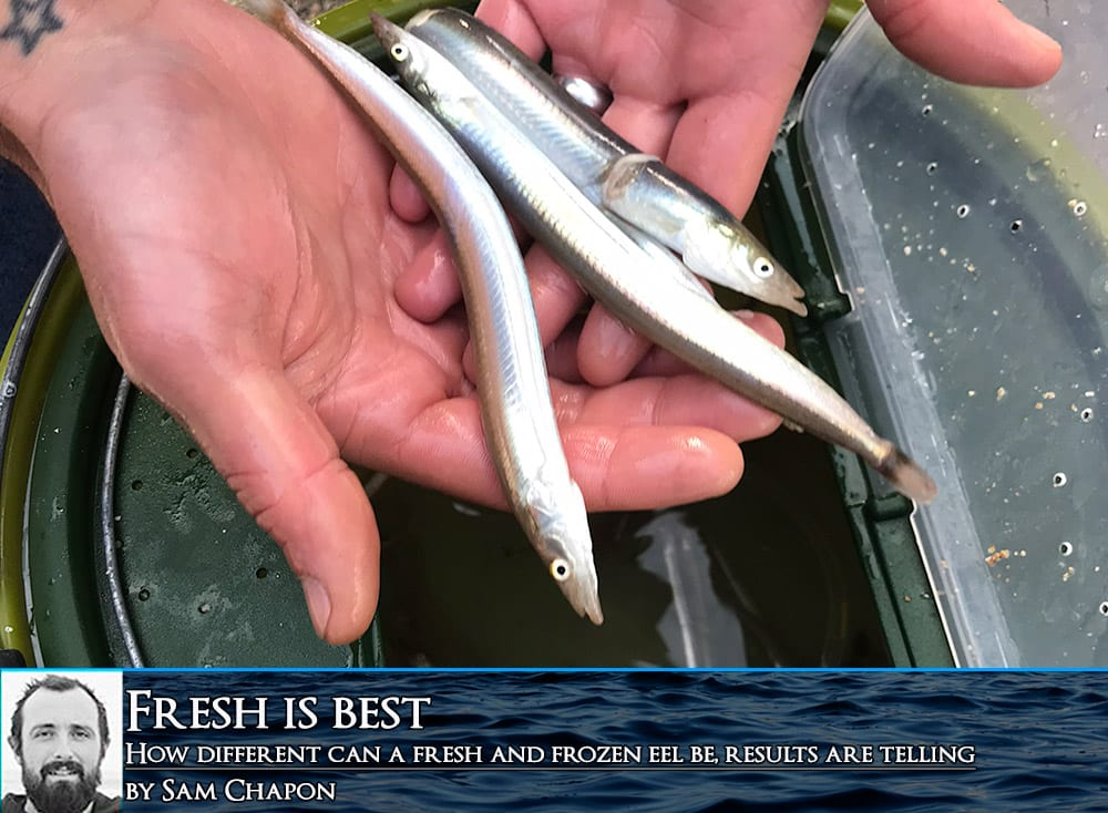 fresh bait is always best